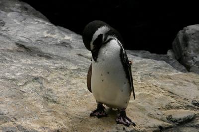 pinguino-triste